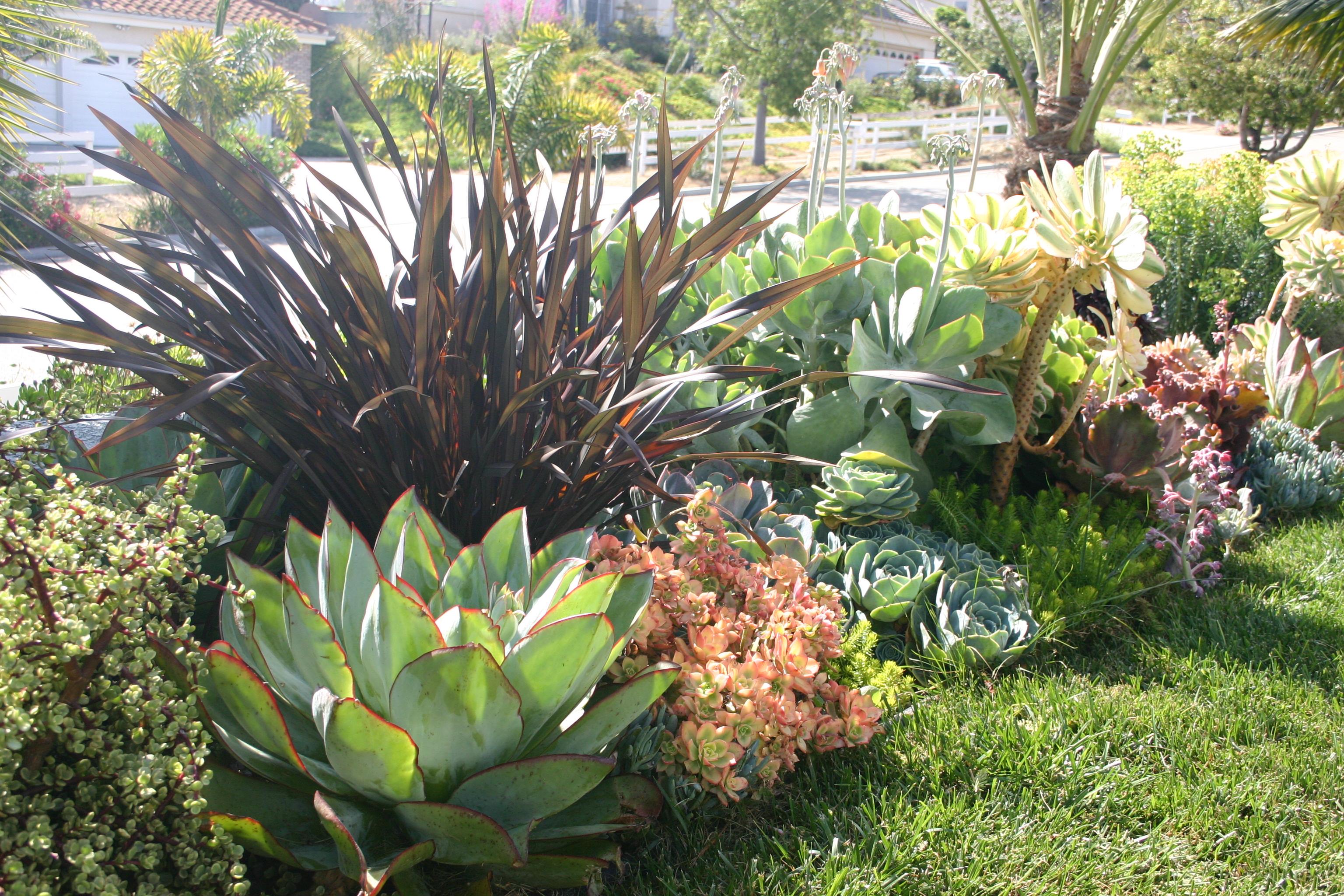 161 best succulent mediterranean gardening images on pinterest
